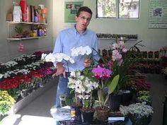 Dicas de jardinagem: Como cuidar de orquídeas