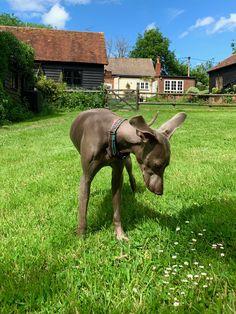 Dog Hotel, New Forest, Hampshire, Horses, Dogs, Animals, Animales, Hampshire Pig, Animaux