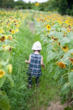 Sunflowers in the country