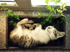 Кошки, которые возомнили себя растениями | В мире интересного