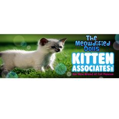 #CharityTuesday:  this month we are supporting Kitten Associates, they are the new Breed of Cat #Rescue. Not only do they help kittens and #cats from high risk situations, such as death row at Kill Shelters, but they also provide Web Based Communication Tools for small, struggling Rescue Groups & Animal Shelters. For more information about this great #charity, visit their Facebook page or website: http://www.kittenassociates.org/ #ModifiedDolls #NonProfit #SuportingCharities…
