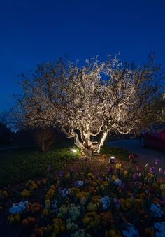 Moonlighting in Music City -- Magical Outdoor Lighting, Moonlight, Nashville, Outdoor Gardens, Perspective, Landscape, City, Music, Plants