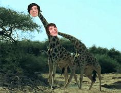 (gif) Dan practically asked for his and Phil's heads to be photoshopped onto giraffes beating eachother...