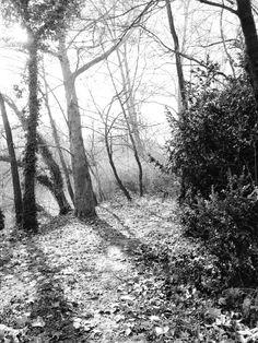 Пишем за aромата на зрели смокини, разпукали се на дървото между жилави зелени листа, за древните и...