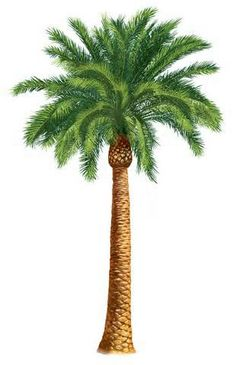 Clip Art Free Palm Tree