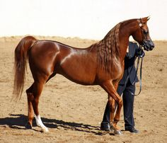 Magnum Psyche <3 (Padron's Psyche x A Fancy Miracle) by sedonasong, via Flickr
