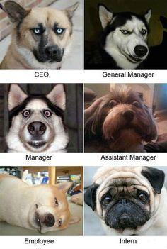 TOP 44 Funny Dog Memes