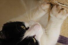 Arranhadores ecológicos para gatos reaproveitam materiais para criar esse acessório tão importante quando você tem um felino em casa. Afinal, na ausência de um, seu bichano vai atacar braços de sofás, tapetes e outros itens da casa! A ótima notícia é que você pode fazer arranhadores de diferentes tipos, com muita facilidade e sustentabilidade. Conheça alguns. Arranhadores de papelão são os mais simples de fazer. Cats, Animals, Kittens Playing, Pretty Animals, Ear Rings, Sustainability, Simple, Gatos, Animales