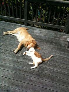 Looks like Apollo and Cat