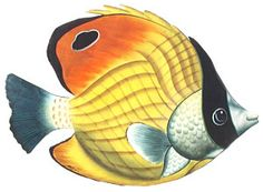 Hand Painted Metal Striped Tropical Fish Wall Hanging - Handcrafted Tropical Design  -   TROPICAL FISH DECOR – Painted metal wall decor, Tropical fish themed switch plate covers, Handcrafted stained glass sun catchers, A huge selection of handcrafted tropical fish themed items for your tropical decorating. - Visit us at www.Tropical-Fish-Decor.com