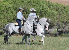 Caballos andaluces / Andalusian horse. #horse #andalucia #caballos #animals
