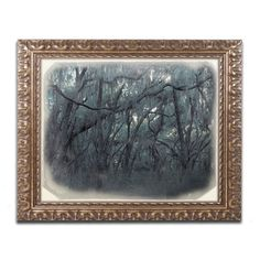 "Trademark Art ""Forest Dreams"" by Patty Tuggle Framed Photographic Print Size: 16"" H x 20"" W x 0.5"" D"