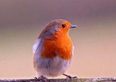 Birds - Coloured
