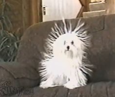 This Little Dog Has Static Cling And It's Hilarious! LOLOL! - http://www.lifebuzz.com/static-dog/