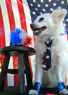 Sew DoggyStyle: Star Spangled Cuffs - A Tutorial