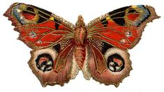 Victorian Graphic - Colorful Butterfly or Moth - The Graphics Fairy