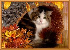 Pory roku : Zwierzęta jesienią