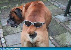 Funny Dog Pictures - Unbound State | Humor Blog | Funny Pictures, Cartoons and Facts