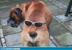 Google Image Result for http://1.bp.blogspot.com/-hY-Kri63wzs/TeHzpxJ2BJI/AAAAAAAAA4Q/pmq2Yvki8WY/s1600/funny-dog-picture-ass.jpg
