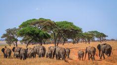 Google+http://annemckinnell.com/2014/12/02/elephants-tarangire-national-park-tanzania/