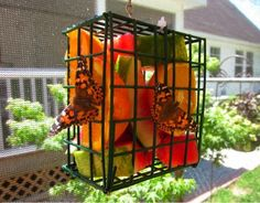 Place fruit inside a bird suet feeder to attract butterflies.