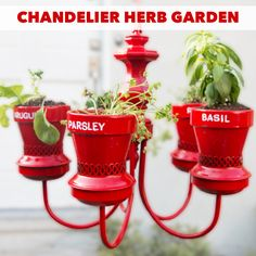 Upcycled an old chandelier into this adorable herb garden!