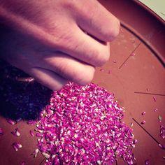 a Estufa de Vilar — @a_estufa_de_vilar #seeds #gomphrenaglobosa...