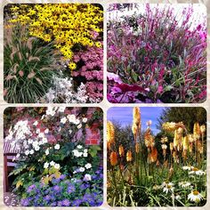 By adding #companion #plants to your mixed #borders not only will you guarantee great colours and textures but they work together to make your #job easier #growhort #welovegardening find some great  Planting Combinations on my blog... Link on profile