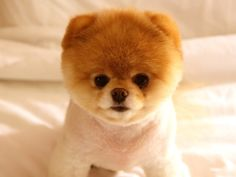 cute_dog_boo-1024x768.jpg 1,024×768 pixels