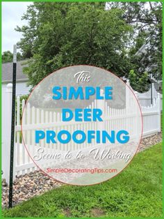 Carpenter Trick to Repair Furniture, HometoCottage Collapsible Dog Crate, Raised Planter Beds, The Tiny Seed, Deer Fence, Morning Songs, Snug Harbor, Crate Cover, What Happened To Us, Florida