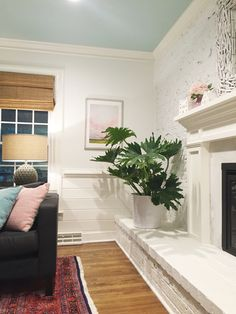 Young House Love | A Large House Plant That's Easier Than A Fiddle Leaf Fig | http://www.younghouselove.com