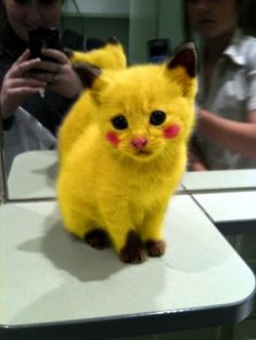 Pokemon Cat : Funny Pictures : Weird Photos : Freaky Photographs ...