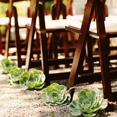 Succulents are popular decoration today - use them to decorate the aisle