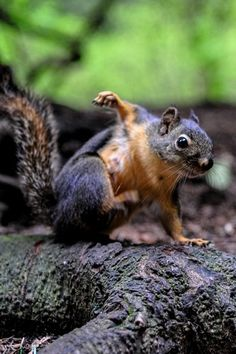 Doing some morning sport? A young squirrel shows some impressive moves.