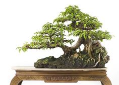 The Art of Bonsai Project - Feature Gallery: The Penjing of Robert Steven