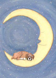 Boxer sleeps on moon