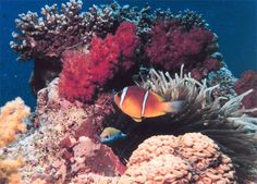 Coral reefs are underwater structures made from calcium carbonate secreted by corals. Coral reefs are colonies of tiny animals found in marine waters that contain few nutrients.