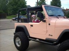the dog sent me 😂😂 Jeep, Monster Trucks, Jeeps