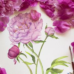 Пионы. #peony #peones #drawings #art #myart #sketch #instaart #artoftheday  #watercolor #акварель #paint #draw #рисунок  #watercolour #aquarelle  #pencilart #illustration  #botanicalart #botany #flowers #flower