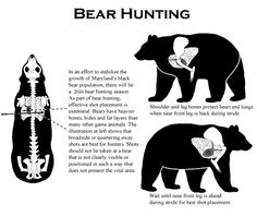 Maryland Department of Natural Resources - Bear Hunting Techniques: Bear Hunters Guide to Hunting Black Bears in Maryland 2011