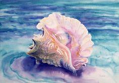 pretty conch shell
