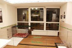 How to make indoor kennel