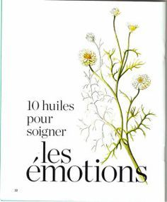 10 essential oils to treat emotions - Aroma terra peütica - Maquillage Camomille Romaine, Eco Beauty, Doterra, Natural Health, Aromatherapy, Health And Beauty, Herbalism, Essential Oils, Healing