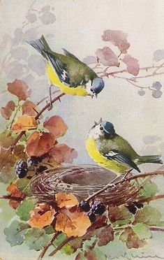 Vintage Postcard Painting by Catherine Klein (born German Artist of Birds, Flowers & Still Life . Watercolor Bird, Watercolor Paintings, Landscape Paintings, Watercolors, Watercolor Portraits, Watercolor Landscape, Abstract Paintings, Art Paintings, Bird Pictures