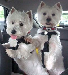 Tilly and Bobby going for a ride in the car! This looks exactly like Lilly and Zoe.