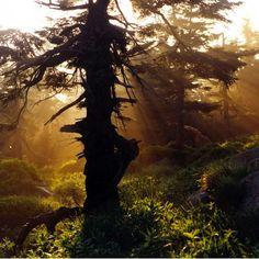 Nationaal #park de #Harz in #Duitsland Germany met haar flora, fauna, #bergen en #bossen #TravelBird