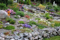 jardin de rocaille avec une murette en pierres