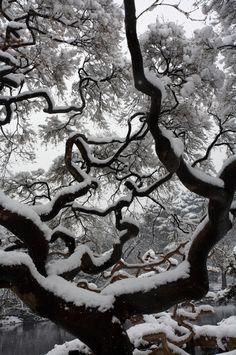 Snow Tree by Tsuguharu Hosoya on 500px.
