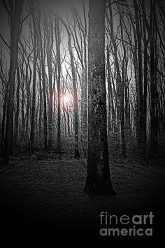 Sun Thru The Trees At Twilight by Tom Gari Gallery-Three-Photography