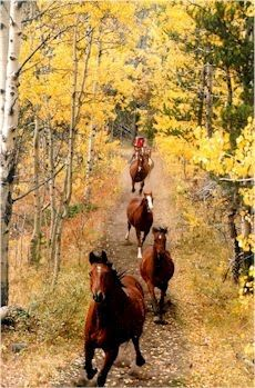 there's something about the freedom of horses running wild that's just beautiful All The Pretty Horses, Beautiful Horses, Animals Beautiful, Cute Animals, Horse Pictures, Animal Pictures, Majestic Horse, Horse Love, Wild Horses